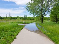 Trails flooded_May 2019_250x250