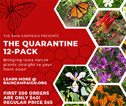 Quarantined 12 pack_250x210