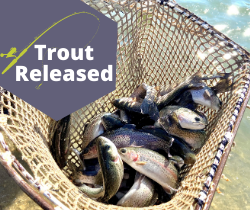 Trout Released_250x210